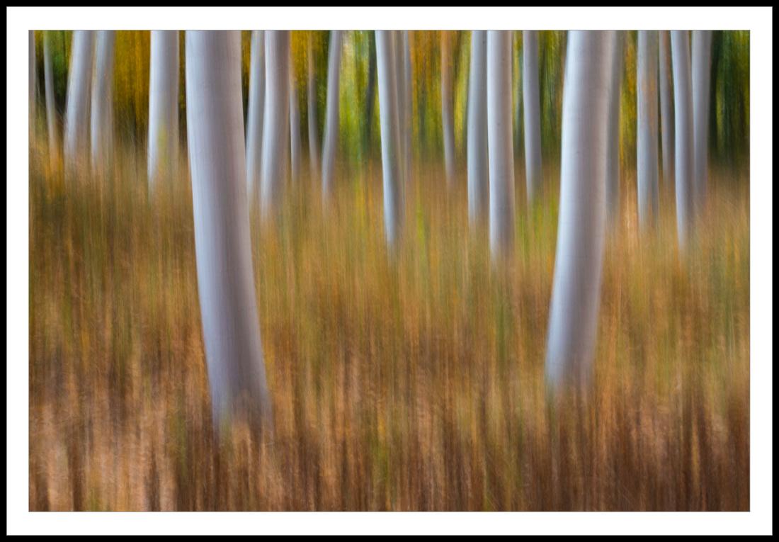 El baile de los bosques