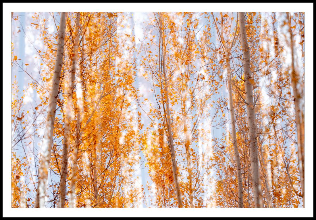 Entre hojas
